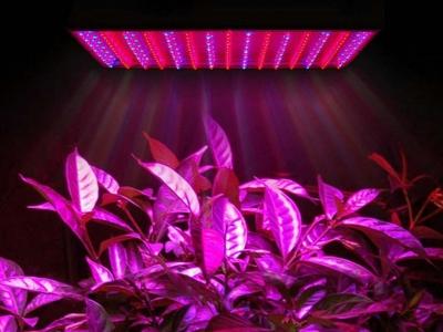 Panel led para cultivo interior expertos for Leds para cultivo interior